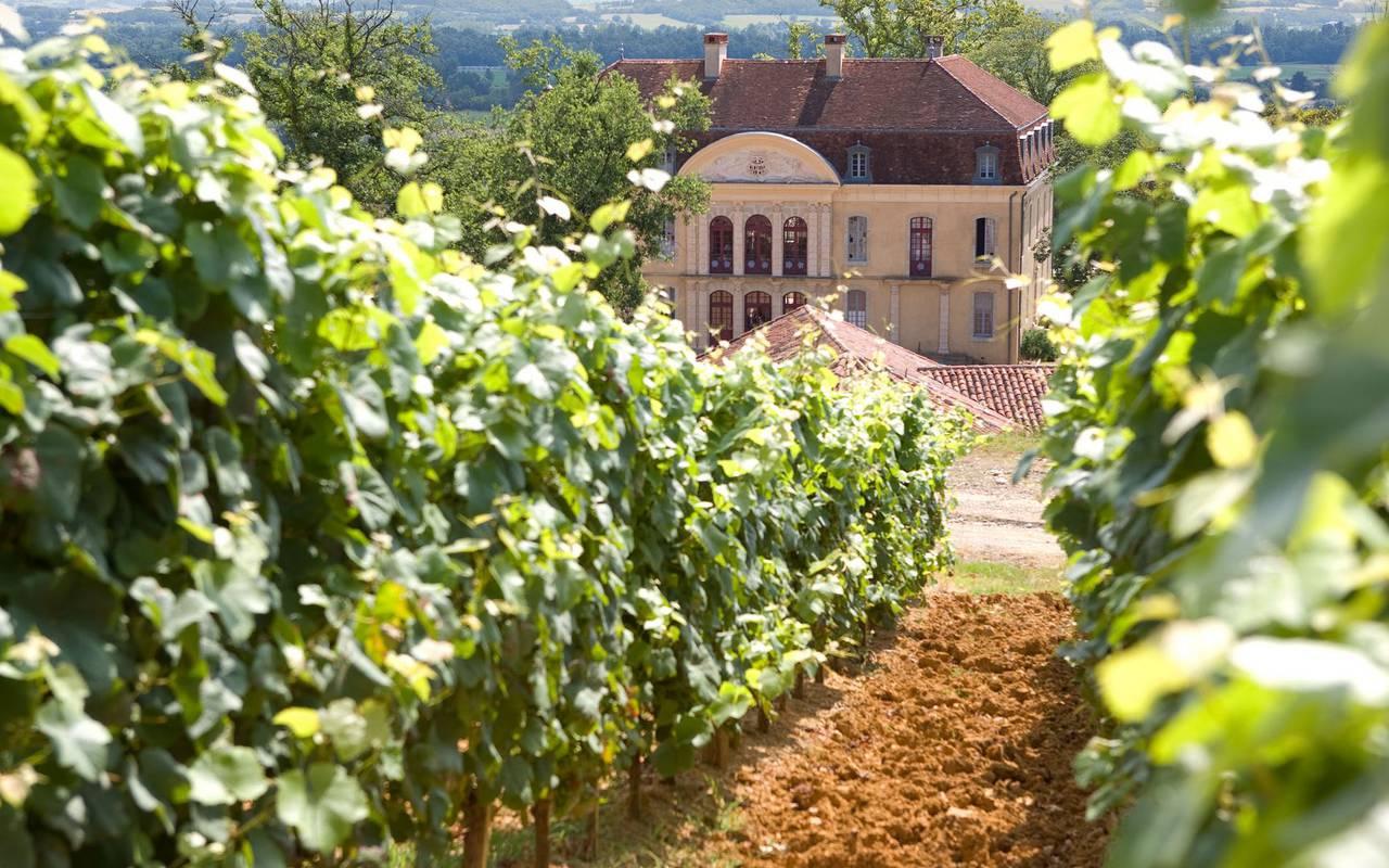 Vignes, activité en famille Occitanie, hôtel Sainte-Rose